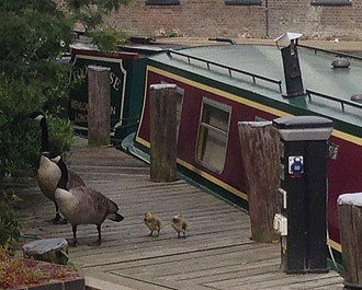 Wadding at Wenlock Basin in North London